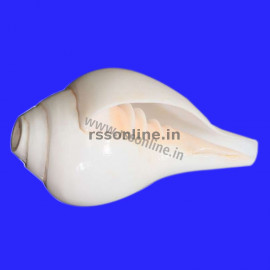 Blowing Conch(Sangu) - 4""